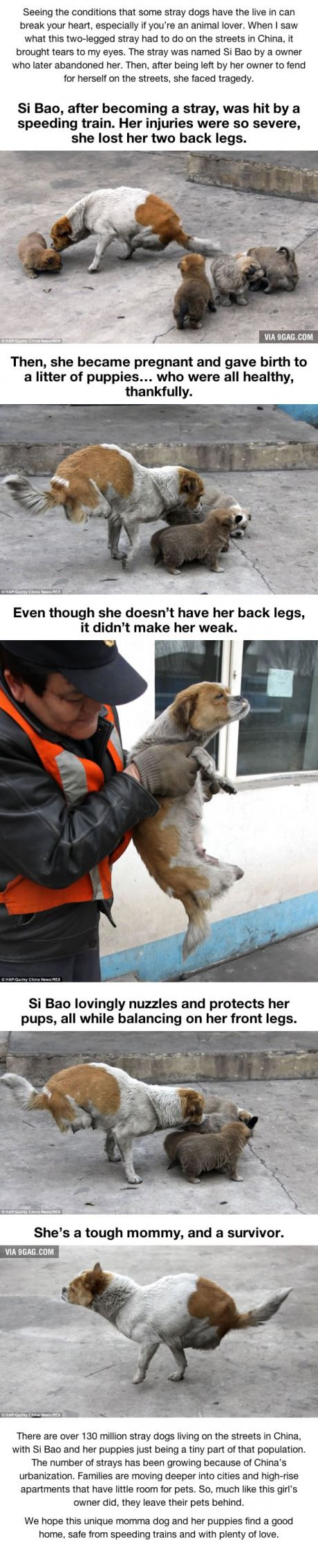 "Seeing What This Stray Dog Did Will Hit You Hard. ♦ℬїт¢â""Œαâ""""Ñ—¢Ñ—øυ﹩♦"