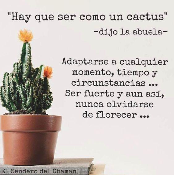 Hay Que Ser Como Un Cactus Adaptarse A Cualquier Tiempo Momento Y Circunstancias Ser Fuerte Y Aún Así No Cactus Quotes Inspirational Phrases Cactus