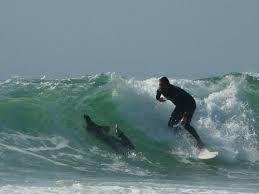 Resultado de imagem para praia da joaquina surf