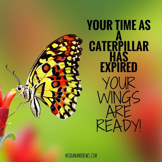 time has wings We all know that we live a limited time, and we all have 24-twenty four hours in a  day to do our chores but, we need to ask ourselves, whether we are doing.