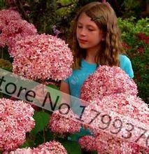 20 unids/bolsa hortensia rosa semillas del árbol de la flor envío gratis(China (Mainland))