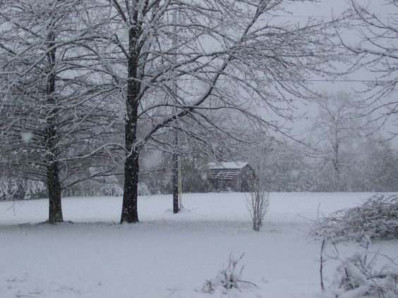 My yard after the snow.