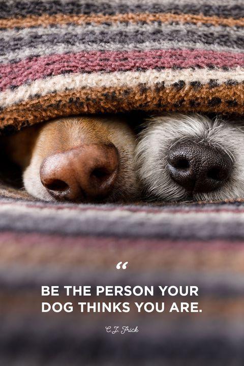 #quotes #dogquotes #qotd #inspiringquotes #puppyquotes