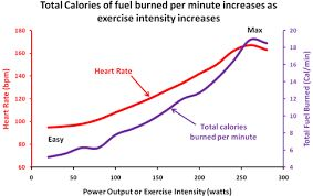 walking 10 kms daily effect - Google Search