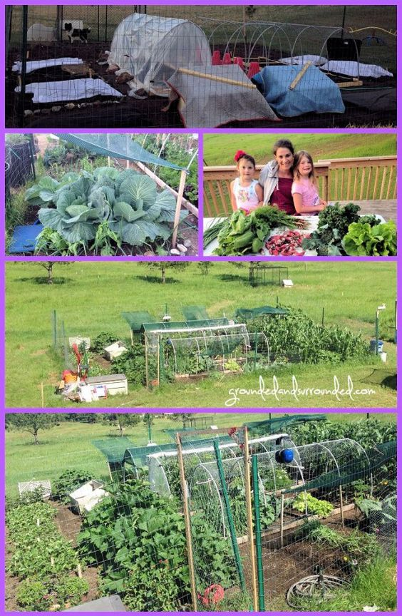 My 5000 Sq Ft Vegetable Garden Plan Gardens