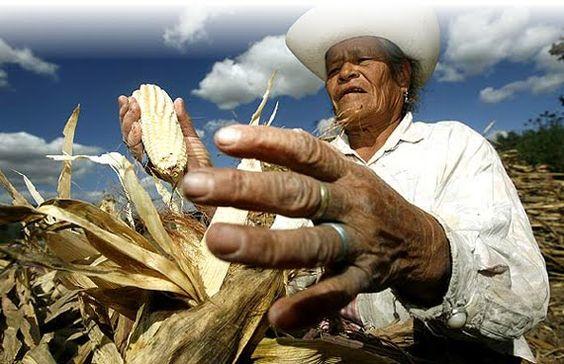 Movimiento Nacional Campesino Indígena