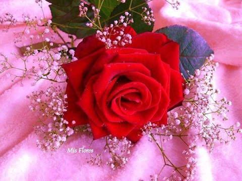FLOWER LOVE: