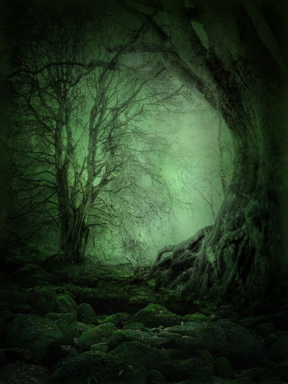 The depths of the forest: