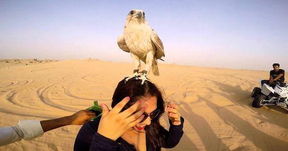 desert safari in dubai: Best Desert Safari Dubai Offers