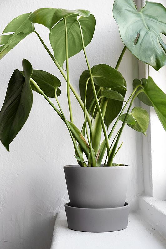 Plants complete the picture perfect coffee corner.