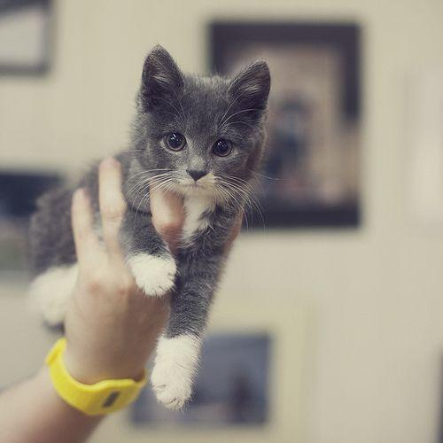 loveee that kitty