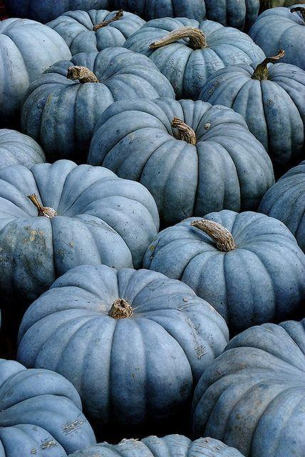 """Blue Pumpkins"""" by Hewett Beasley/Beetree Studio on Flickr:"""