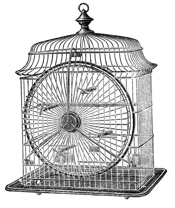 Antique bird cage drawing - photo#33
