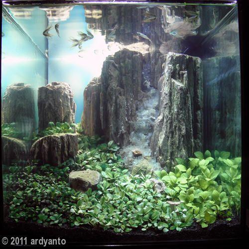 Aquascape Waterfall Aquarium : Explore Aga Aquascaping, Aquascaping Competition, and more!