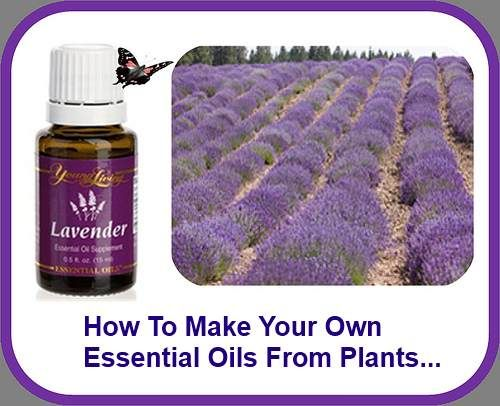 how to make your own essential oil from plants