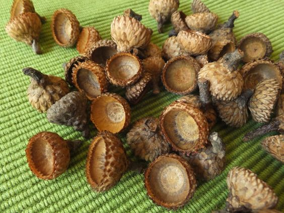 Pinterest the world s catalog of ideas for How to preserve acorns for crafts