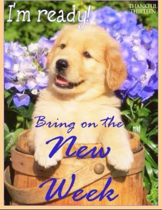 Image result for daily animal greetings