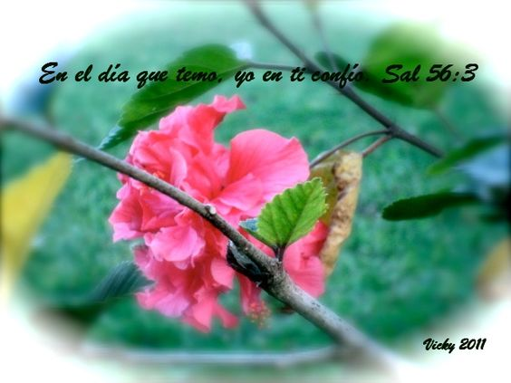 01 Versículos Bíblicos En Español