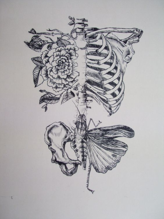 """""""Soft Anatomy"""" 2011 Drypoint etching, Rebecca Ladds"""