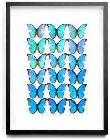 Pheromone Blue Butterflies