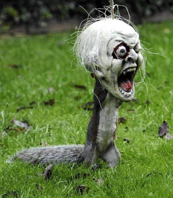 Squirrel @Lynsey Dexter