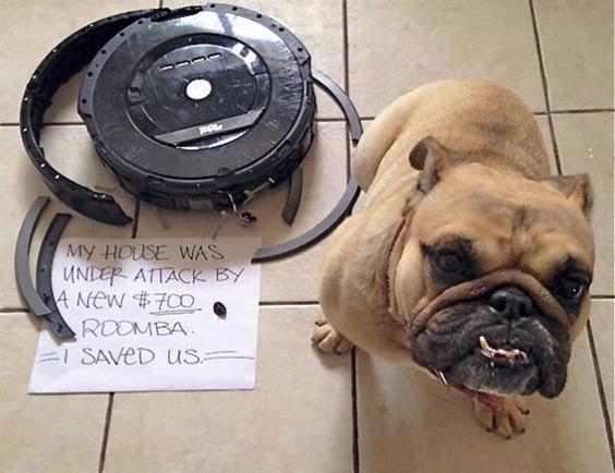 That'll do Pug.  That'll do.