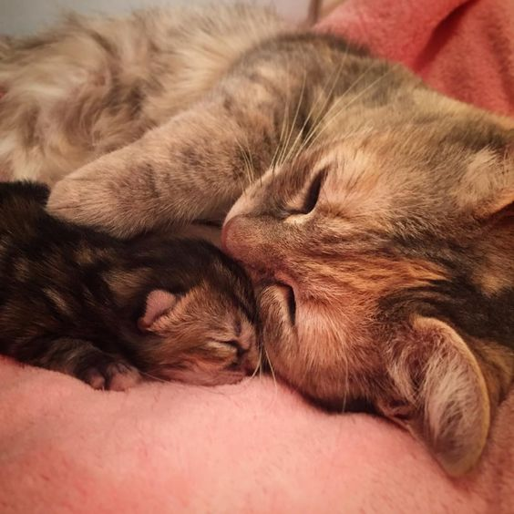 A mother cat is sharing a tender moment with her newborn baby... Mother's love on full display!