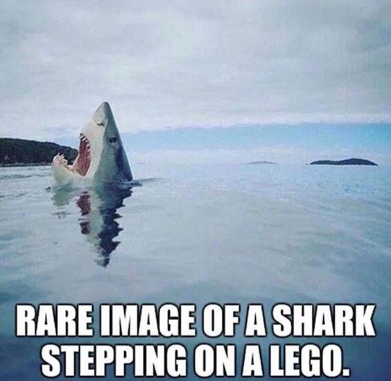BIRDS & DAFFODILS: RARE IMAGE OF A SHARK STEPPING ON A LEGO http://birdsanddaffodilsbylyndabergman.blogspot.com/2016/11/rare-image-of-shark-stepping-on-lego.html: