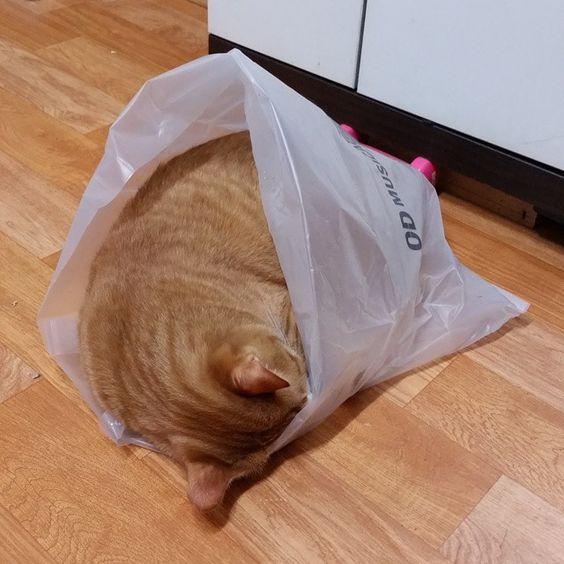 hehe  Look.  A cat in a bag.