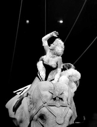 Marilyn Monroe Rides An Elephant At The Premiere Of Ringling Brothers And Barnum Bailey Circus