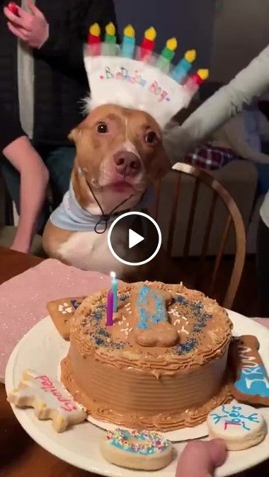 Festinha Pra Cachorro