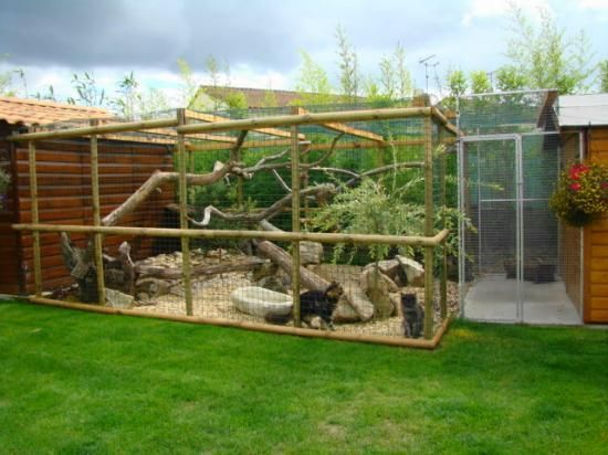 Outdoor cattery i love this having tree branches to for Cage lapin exterieur