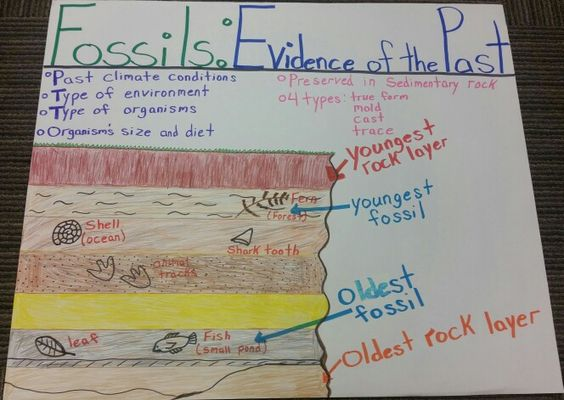 Fossils Evidence Of The Past Anchor Chart Science Anchor Charts Fourth Grade Science Science Lessons Fossil worksheets 4th grade