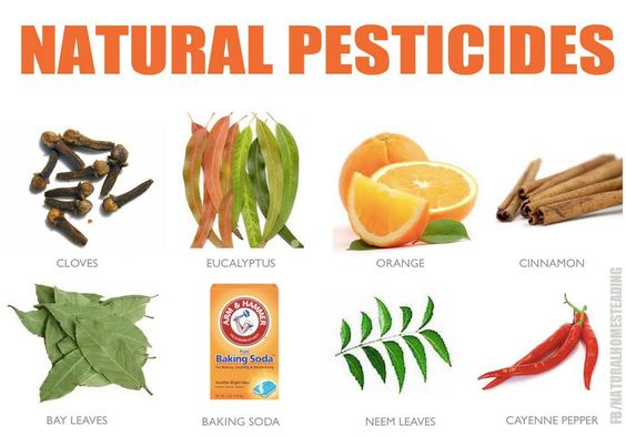 natural pesticides alternatives for home and garden pest control edit