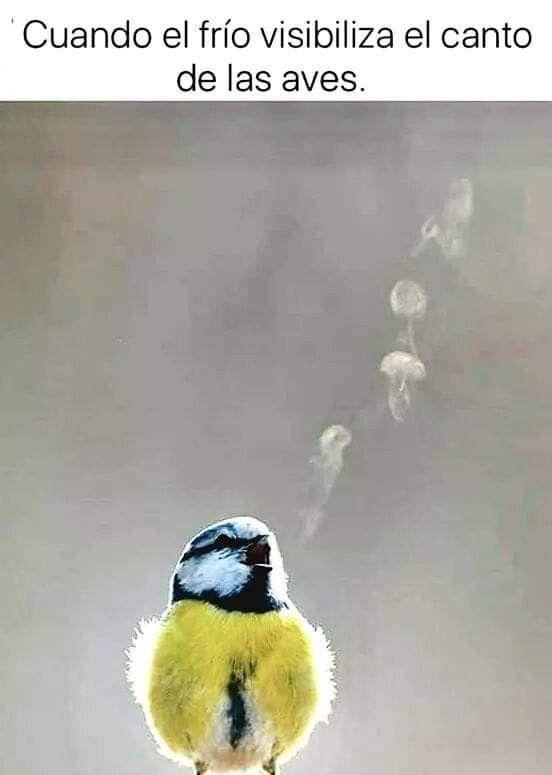 Pin De Gabriela Pollio En Pajaros Aves Memes De Frio Aves Canto