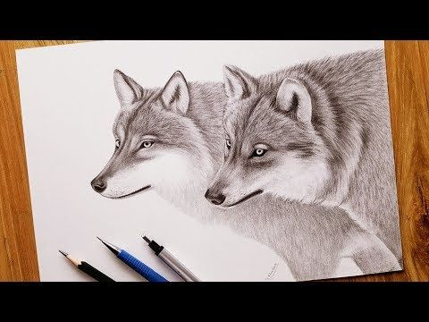 How To Draw Wolves Step By Step With Lead Pen Real Time Wolf Drawing Drawings Animal Drawings