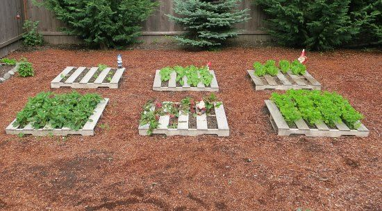 Quick Raised Bed (Only use HT - heat treated - pallets) This would be great for cut and come again greens.