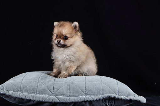 Pin On Puppies For Sale In Florida