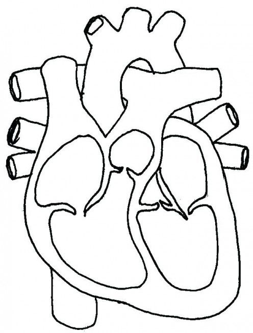 Human Heart Coloring Pages Science Circulatory System Page For Kids Pdf Lymphatic Humanbodysystem Huma Heart Diagram Human Heart Diagram Simple Heart Diagram