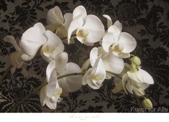 Donna Geissler - Bountiful Orchids