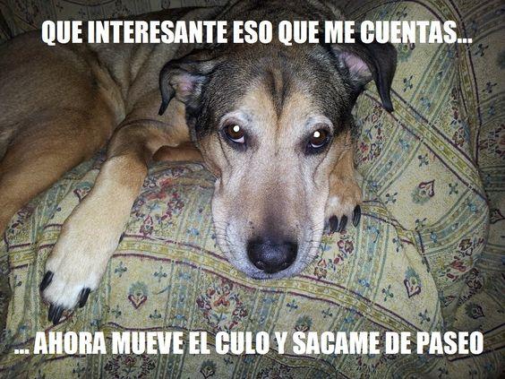 "Mi primer ""meme"" con mi perra..."