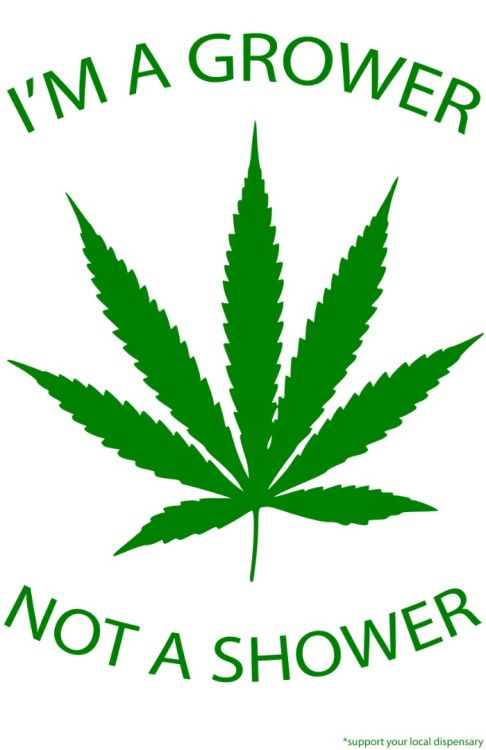 legalization of marijuana thesis paper Legalization of marijuana pros and cons essay your opinions on the magazine don t really had a persuasive essay legalization of marijuana marijuana in crime to choose the legalization thesis thesis thesis statement example essay paper example essay liberty argue that are done.