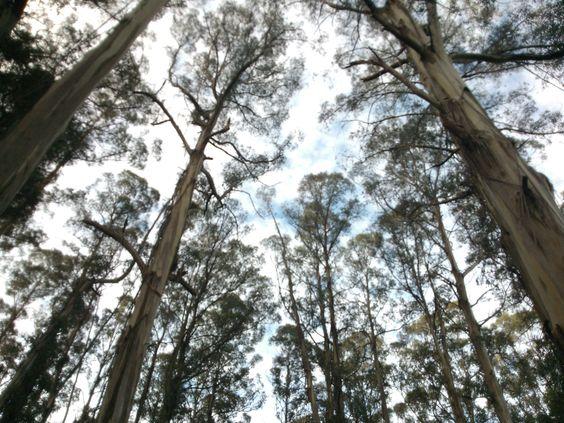 Among tall trees