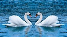 Two Swans On A Lake HDP0040 Art Print Poster Canvas A4 A3 A2 A1