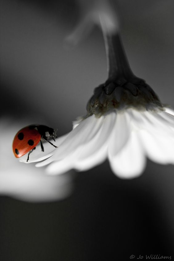 hello, little ladybug! design your musical journey Muzikool.com