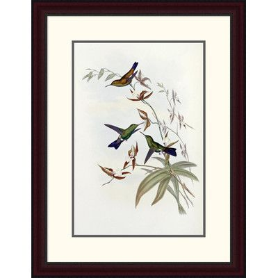 Global Gallery 'Family of Hummingbirds' by John Gould Framed Painting Print Size:
