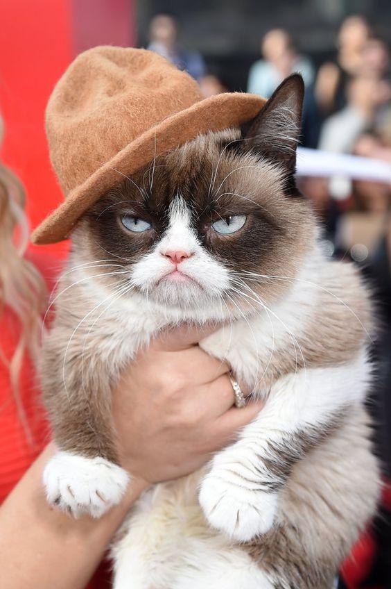 Pin for Later: Les stars étaient nombreuses hier soir aux MTV Movie Awards ! Grumpy Cat
