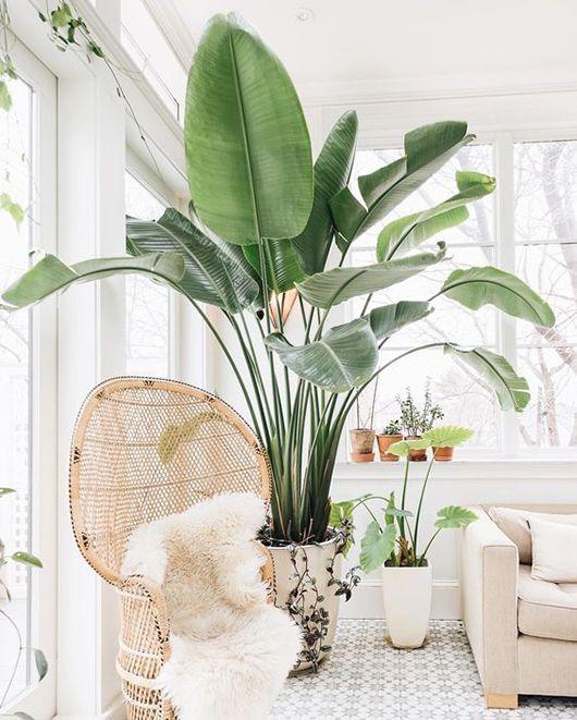 Bright botanical living room //