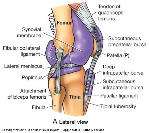 The 25+ best Knee ligaments ideas on Pinterest