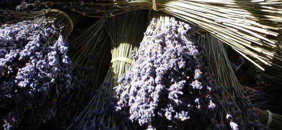 Lavendel trocknen braucht Zeit. Tipps zu Lavendel ernten, Blüten trocknen, Säckchen, Salz & Zucker und Lavendeltee. Lavendel trocknen kann jeder selbst uvm.